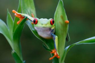画像タイトル蛙